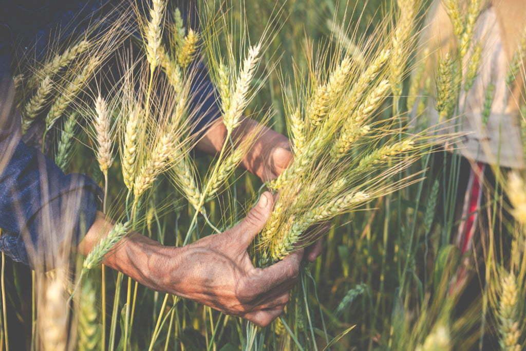 PM-Kisan-Farmer-Harvest